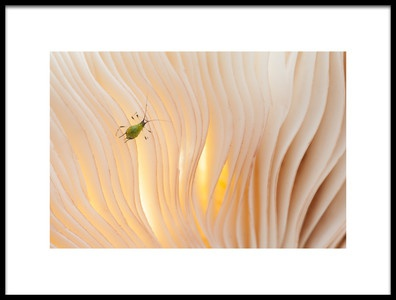 Art print titled  Aphid Under a Mushroom  by the artist Piet Haaksma