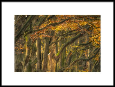 Art print titled  Approve Autumn  by the artist Piet Haaksma