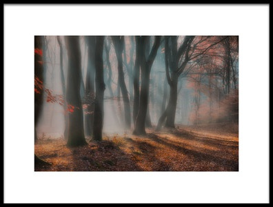 Art print titled  Dreamy Forest  by the artist Piet Haaksma
