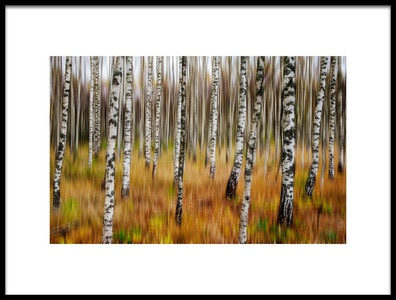 Art print titled 3D Birches by the artist Par Soderman