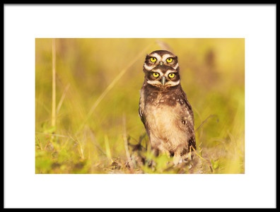 Art print titled 4 Eyes by the artist Itamar Campos
