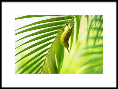 Art print titled 50 Shades of Green by the artist Daniele Bariviera