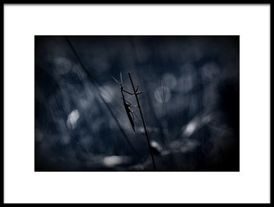 Art print titled A Darker Shade of Pole by the artist Barré Thierry