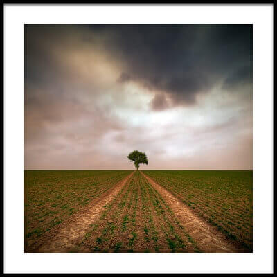 Art print titled A Tree by the artist Piotr Krol (Bax)