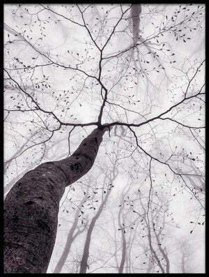 Art print titled A View of the Tree Crown by the artist Tom Pavlasek