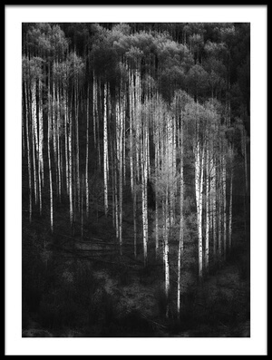 Buy this art print titled Abstract Forest by the artist Atul Chopra