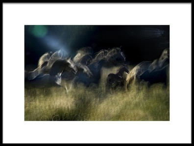 Art print titled Action Horses by the artist milan malovrh