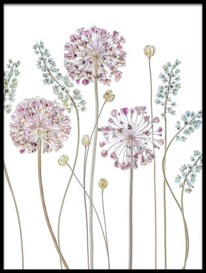 Art print titled Allium by the artist Mandy Disher
