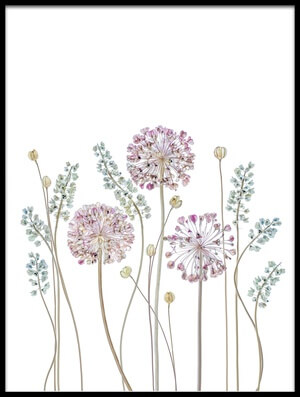 Buy this art print titled Allium II by the artist Mandy Disher