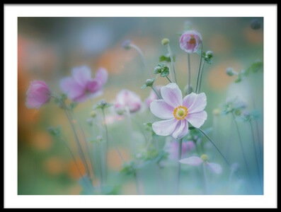 Art print titled Anemone by the artist Miyako Koumura