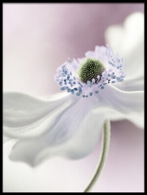 Buy this art print titled Anemone Breeze by the artist Mandy Disher