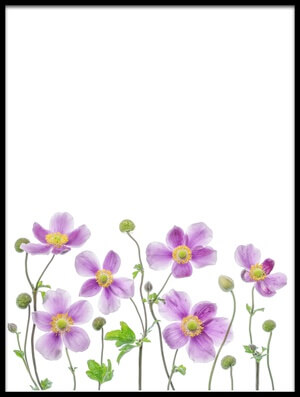 Buy this art print titled Anemone Japonica II by the artist Mandy Disher