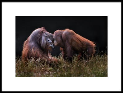 Art print titled Apes for Mates by the artist Hugh Wilkinson