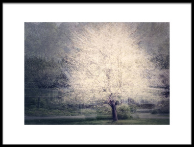 Buy this art print titled Apple Tree by the artist Katarina Holmström