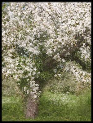 Buy this art print titled Apple Tree by the artist Jutta Kerber
