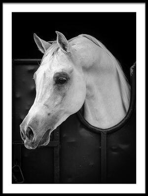 Buy this art print titled Arabian Horse by the artist WASEEM AL-HAMMAD