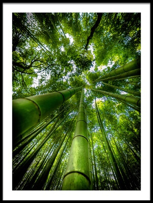 Buy this art print titled Arashiyama by the artist David Ros