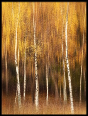 Art print titled Autumn by the artist Gustav Davidsson