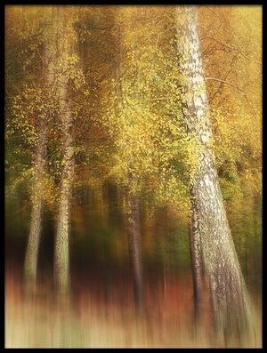 Art print titled Autumn Colors by the artist Gustav Davidsson