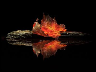 Art print titled Autumn Colors by the artist Aida Ianeva