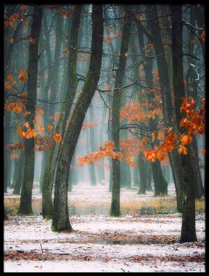 Art print titled Autumn In My Soul by the artist alexandra fira