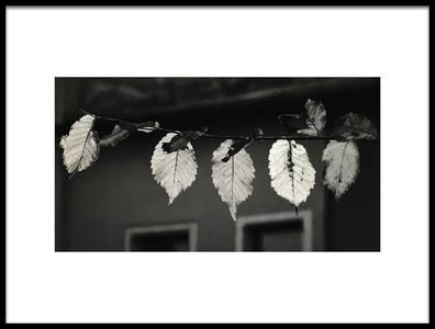 Art print titled Autumn Leaves by the artist gabriela pantu