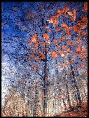 Art print titled Autumn Leaves II by the artist Florentin Vinogradof
