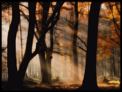 Buy this art print titled Autumn Light by the artist Jan Paul Kraaij