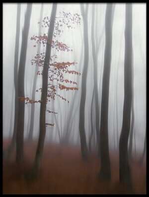 Art print titled Autumn' Mist by the artist michel manzoni