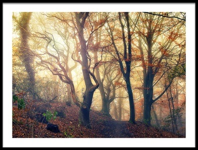 Buy this art print titled Autumn Morning by the artist Leif Løndal