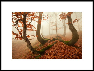 Art print titled Autumn Octopus In the Ore Mountains by the artist Daniel Řeřicha