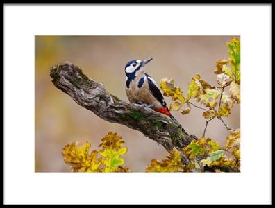 Art print titled Autumn Woodpecker by the artist Mario Suárez