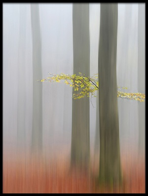 Buy this art print titled Autumnmorning by the artist Huib Limberg