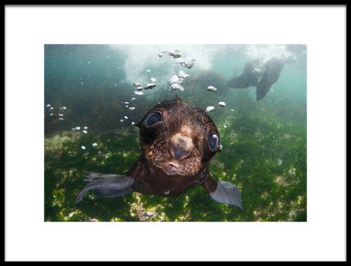 Art print titled Baby of the Sea by the artist Andrey Narchuk