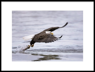 Buy this art print titled Bald Eagle by the artist Purple Bamboo