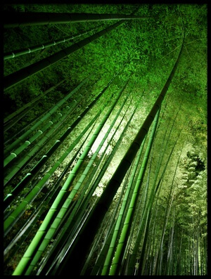Art print titled Bamboo Night by the artist Takeshi Marumoto