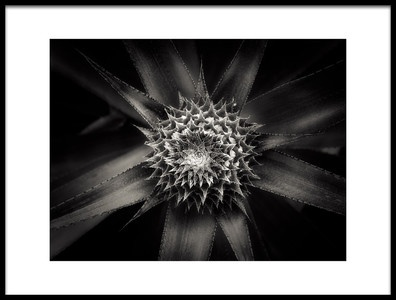 Buy this art print titled Barbed D08150251 by the artist Joerg Sannwald