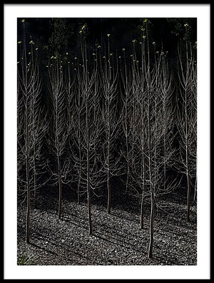 Buy this art print titled Bare Trees by the artist JA Ruiz Rivas