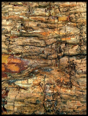 Buy this art print titled Bark by the artist Jure Kravanja