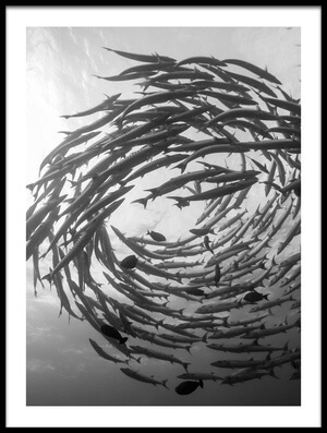 Buy this art print titled Barracuda Tornado by the artist Yumian Deng