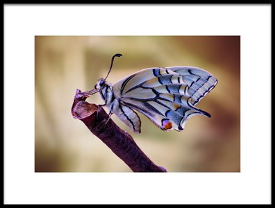 Art print titled Basking by the artist Jimmy Hoffman