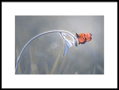 Art print titled Beautiful Butterfly by the artist Edy Pamungkas