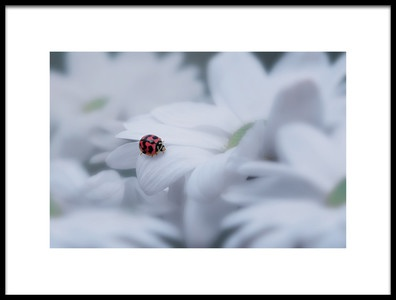 Art print titled Beautiful Ladybug by the artist Edy Pamungkas