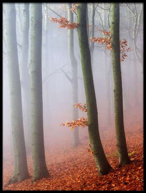 Art print titled Beeches by the artist Martin Rak
