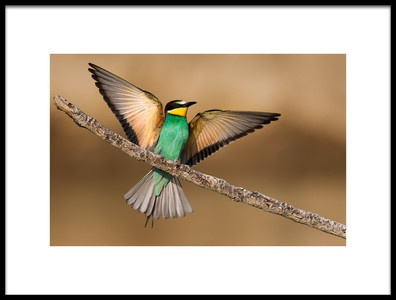 Art print titled Beeeater by the artist Giorgio Disaro