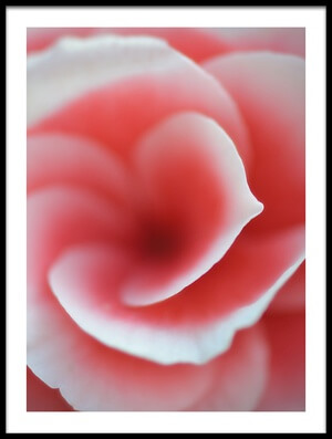 Buy this art print titled Begonia by the artist Lotte Grønkjær