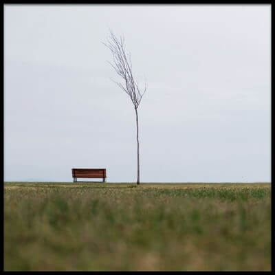 Art print titled Bench and Tree by the artist Ali Ayer