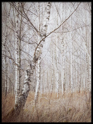 Buy this art print titled Birch Forest by the artist Renate Wasinger
