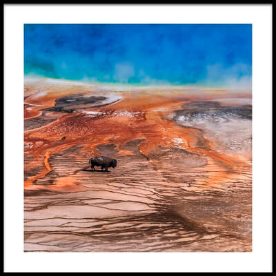 Buy this art print titled Bison by the artist Tom Meier