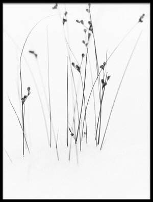 Buy this art print titled Black On White by the artist Dusan Ljubicic